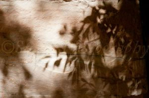 Leaf Shadows 1
