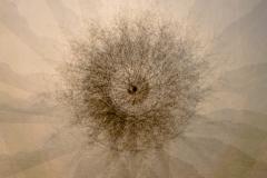 Tree-Mandala-1